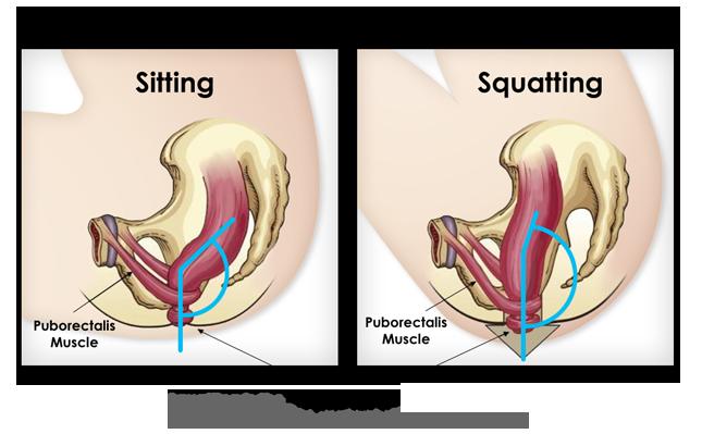 Sitting vs Squatting