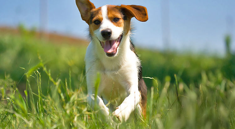 dog_running