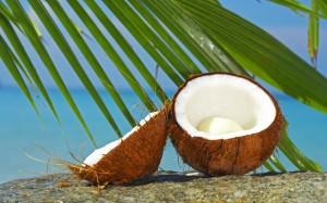 coconuts - EndAllDisease