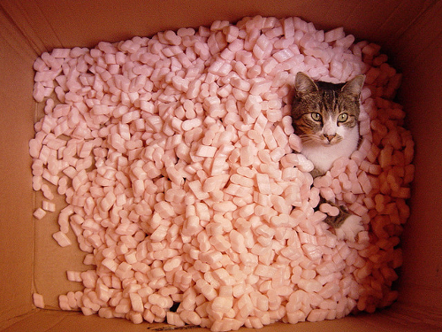 Styrofoam-Cat-Mushrooms-EndAllDisease