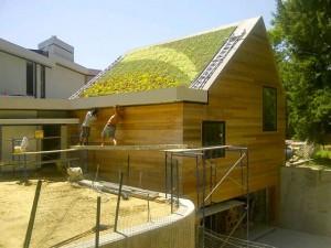 Green bronx machine roof - endalldisease