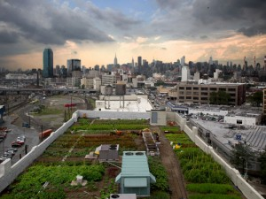Brooklyn-Grange-rooftop-farm-New-York-City-1