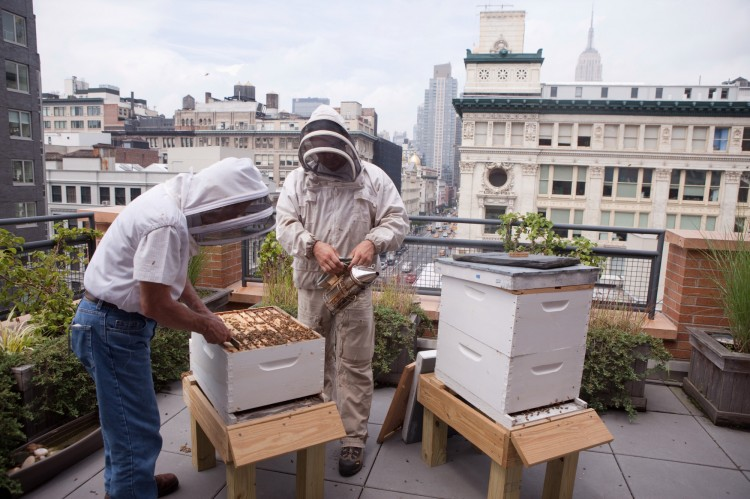Urban beekeeping22 - EndAllDisease