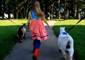 Walking Goats Itty Bitty Farm in the City - EndAllDisease