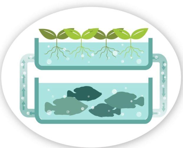 Aquaponics-compressor