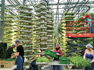 Farmed Here Vertical Farms - EndAllDisease