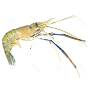 Freshwater Prawns - EndAllDisease
