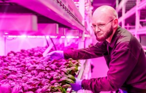 Green Sense Vertical Farms - EndAllDisease