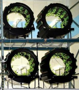 Green Spirit vertical Farms - EndAllDisease