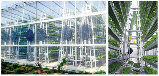 Sky Greens vertical farms Singapore - EndAllDisease