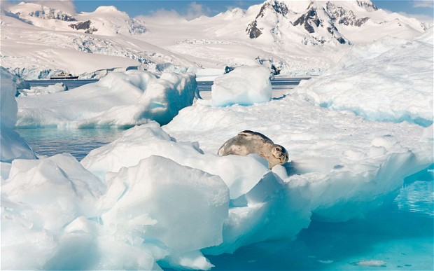 seal-meltwater_2194785b