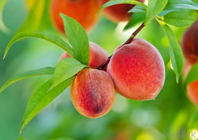 Organic Pesticides - EndAllDisease