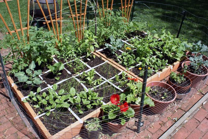 1-square-foot-gardening
